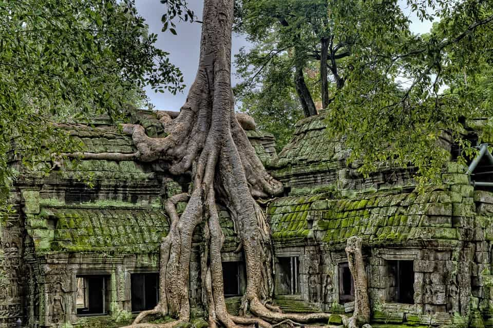 This is Ta Prohm, the tree temple of Angkor Wat.