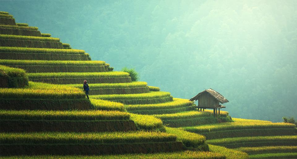 Stunning rice terraces in Thailand. In steps like those you have to follow to get in to the country.